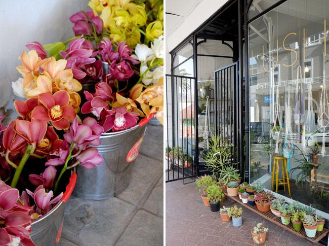 Lush florist, Cape Town