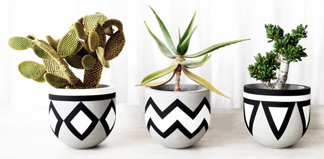 Gold Bottom Planters