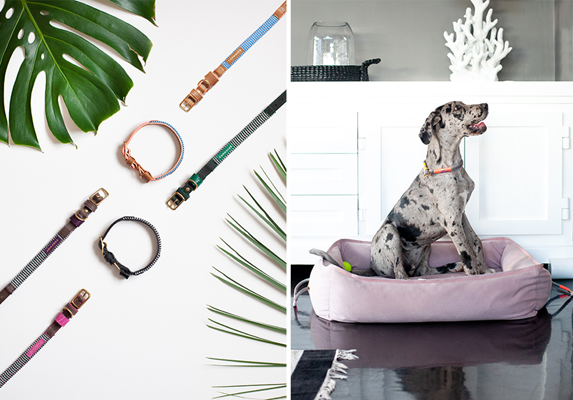 Chommies Pet Accessories